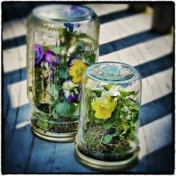 Mason Jar Terrariums | Grown Green Gardens | Scoop.it