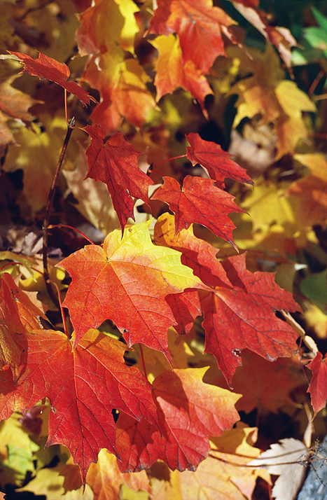 Photosynthesis: Fall's Most Valuable Lesson | school gardens | Scoop.it