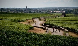 #Burgundy by bike: a #wine tasting weekend | Vitabella Wine Daily Gossip | Scoop.it