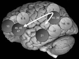 Identifican la Red Cerebral Vinculada a la Inteligencia   la ciencia cognitiva, una investigación interdisciplinar:Etapas de su construcción, Jesús Martínez Velasco.   Scoop.it