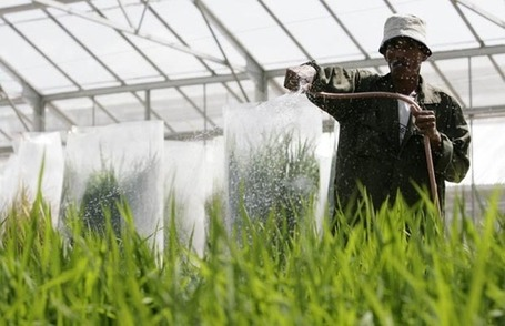 No hunger game: 'Green bullet' ideas sought to feed the world's billions - The Province | CGIAR Climate in the News | Scoop.it