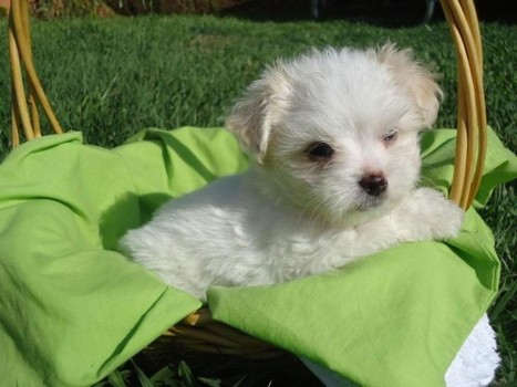 Some Important Things to Look for Pets for Sale | Pets - Buy Pets Online | Scoop.it