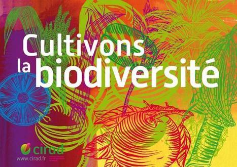 Cultivons la biodiversité | Environnement et développement durable, mode de vie soutenable | Scoop.it