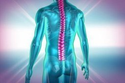 Controlling body movement with light: Neuroscientists inhibit muscle contractions by shining light on spinal cord neurons   Social Neuroscience Advances   Scoop.it