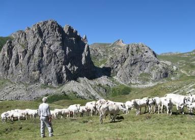 Alpeggi quotati a prezzi record | Vallée d'Aoste | Scoop.it