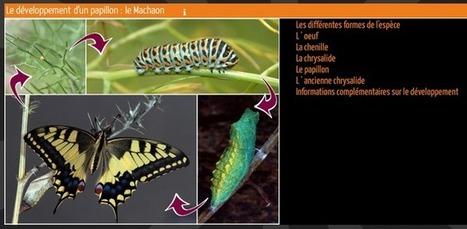 Enseigner avec le numérique - XIA : Images actives | Educnum | Scoop.it