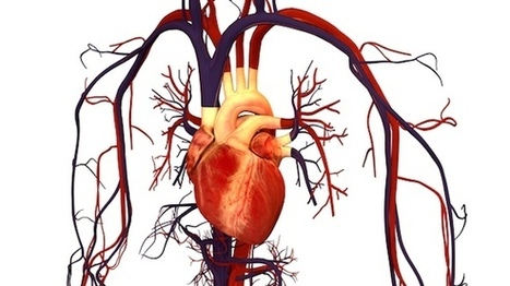 Vagus Nerve Stimulation for Heart Failure? - About Health Degrees | Salud Publica | Scoop.it