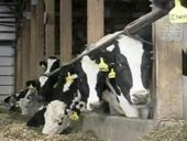 Saving the Family Farm: A Look at Large Dairy Farms and Why they Draw ... - WSAW   All Wisconsin News   Scoop.it