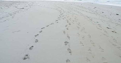 List of .ORG And .EDU Backlinks Footprints | Siteber | WordPress | Scoop.it