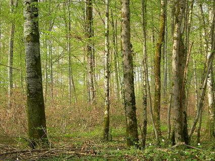 #challengeAZ - C comme Code forestier | Rhit Genealogie | Scoop.it