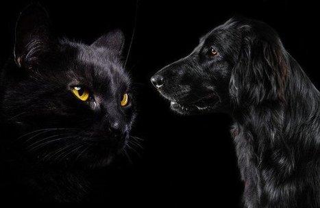 Understanding Black Pet Myths - Pet360 Pet Parenting Simplified   Animal Empathy & Natural Pet Care   Scoop.it