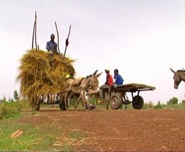 Faim des paysans : une ruine programmée | Questions de développement ... | Scoop.it