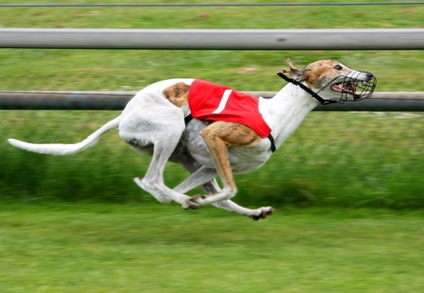 Greyhound Racing Tips - 14th August | Betting Gods | Sports Betting | Scoop.it