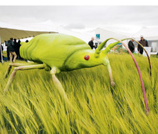 Rothamsted mention: Barley yellow dwarf virus levels set to rise   BIOSCIENCE NEWS   Scoop.it
