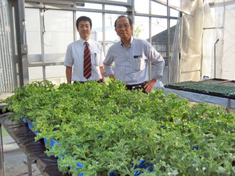 Detour_Ice Plant: Last Resort against Desertification | Vertical Farm - Food Factory | Scoop.it