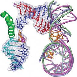 Ingeniería biomolecular - Alianza Superior   Ingeniería biomolecular   Scoop.it