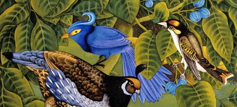 Fly, Fly Away   Watch 5 Animated Shorts Starring Birds - NFB/blog   Digital Storytelling   Scoop.it