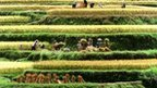 """BBC: Nations need food security goals - 7 point to """"call to action"""" from CGIAR 