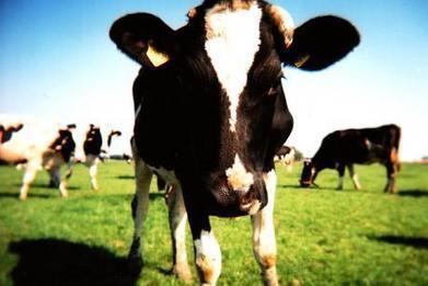 TTIP : un traité contre les paysans et la cause animale   Questions de développement ...   Scoop.it