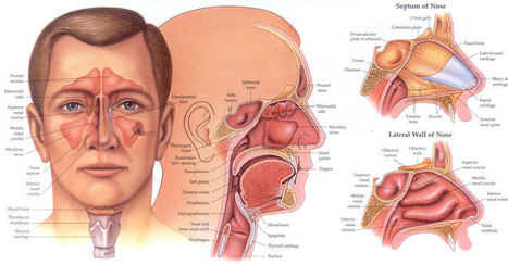 Sinus and Nasal Surgery | Infectious and Chronic Disease Treatment | Scoop.it