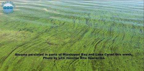 LCC Week 15 blue-green algae report | Canoeing & Kayaking | Scoop.it