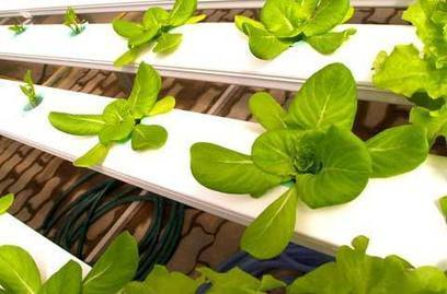 Gardening Site »  Aeroponics – Benefits and Disadvantages | aeroponics | Scoop.it