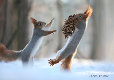 Squirrel Kung Fu | I didn't know it was impossible.. and I did it :-) - No sabia que era imposible.. y lo hice :-) | Scoop.it
