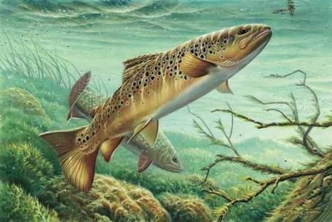 Ammonia in fish ponds | UPM Aquatic Animal Health Unit | Aquaculture Directory | Scoop.it