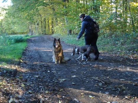 Vidéos éducation canine- Ecole du chiot-jeux- obeissance-recherche du maitre-marche au pied sans laisse-letoiledesbergers.com | Educateur canin en Alsace - Etoile des bergers | Scoop.it