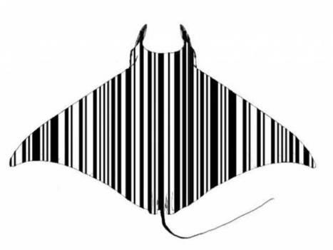 Utiliser la génétique pour aider à identifier les espèces protégées de raies Manta & Mobula | Rays' world - Le monde des raies | Scoop.it