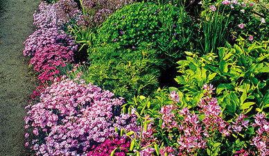 Five ways to lessen your workload in the garden - Easy lifting (and division) - Jobs in the Garden by Season - What to do now - Canadian Gardening | Gardening is more than Digging the Dirt | Scoop.it