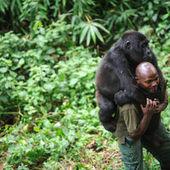 Pour sauver le parc des Virunga, WWF porte plainte contre le pétrolier Soco | Virunga - WWF | Scoop.it