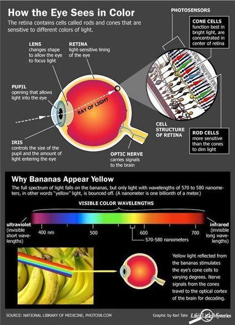 Eyecare Business | The Retina | Scoop.it