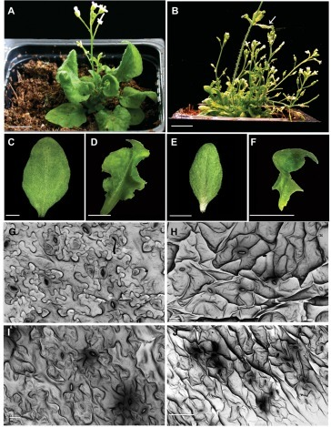 The Arabidopsis ROP GTPase AtROP6 functions in developmental and pathogen response pathways | Plant-Microbe Interaction | Scoop.it