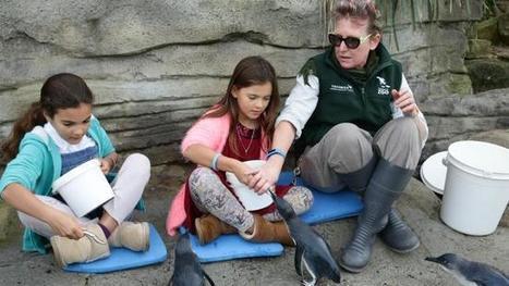 Swiss misses help little penguins | NSW National Parks | Scoop.it
