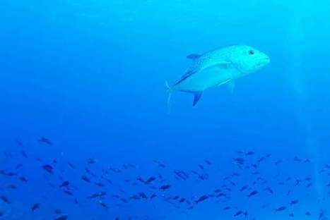 #Diving for #data on #fish populations & how they #adapt to #environmental Changes! | Rescue our Ocean's & it's species from Man's Pollution! | Scoop.it