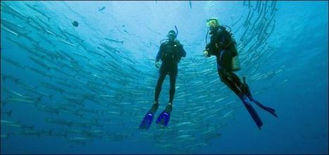 Diving medicine - Diving physics, Illness caused by diving, Fitness to dive - Travel tips | Scuba Dive Travel | Scoop.it