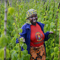 Developing innovation systems for African agriculture rather than technology transfer- SciDev.Net | GMO GM Articles Research Links | Scoop.it