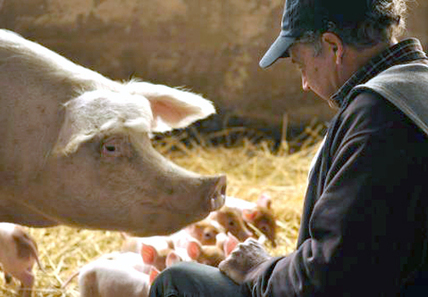 Fifth-Generation Farmer Shares His Success Raising Pigs Sustainably and Antibiotic-Free   EcoWatch   Scoop.it