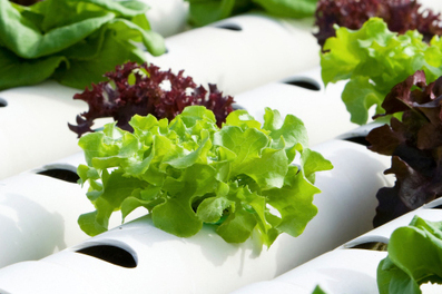 "Hydroponics: The ""Working Water"" Way of Gardening : Living Green Magazine 