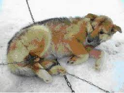 Iditarod - The Worst Case Of Animal Cruelty In The US - The Petition Site | Nature Animals humankind | Scoop.it