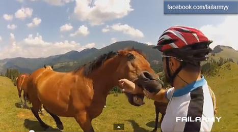 Chomp! The most epic bite of 2013 | Horses  around the world | Scoop.it