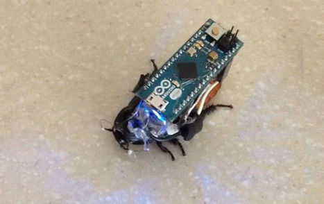Make your own cyborg cockroach for under £30 | Raspberry Pi | Scoop.it