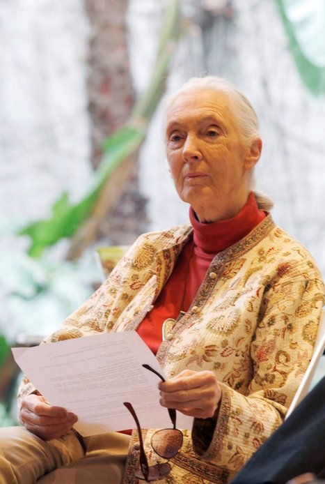 Jane Goodall Admits Borrowing Passages for New Book | Plagiarism | Scoop.it