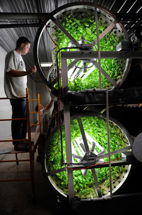 Inside Track: Garden Fresh Farms cultivates more honors | Aquaponics~Aquaculture~Fish~Food | Scoop.it