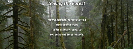Seeing the Forest | Environment and Biodiversity | Scoop.it