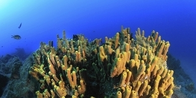 Underwater treasures - New Zealand Herald | Undersea Exploration | Scoop.it