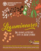 Légumineuses: Des graines pour un avenir durable | Veille Scientifique Agroalimentaire - Agronomie | Scoop.it