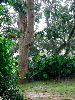 Developing potential for rainwater harvesting in the Caribbean ... | Rainwater Harvesting : world tour | Scoop.it