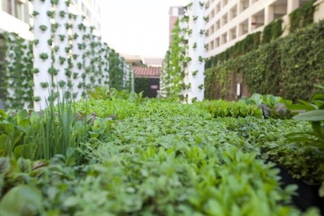 USC's Teaching Garden takes urban farming to new heights | Vertical Farm - Food Factory | Scoop.it